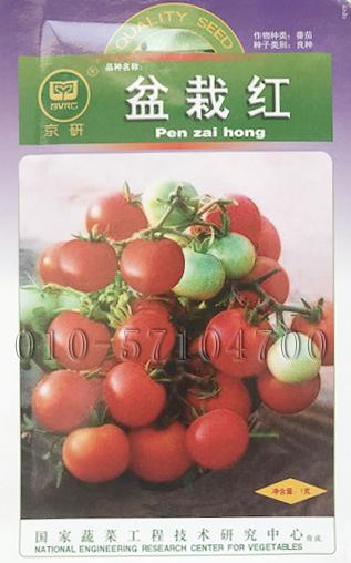 盆栽红番茄种子|矮生盆栽番茄种子 小番茄种子 樱桃番茄种子
