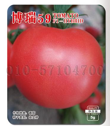 博瑞59番茄种子|西红柿种子 春秋保护地露地番茄种子 粉果肉厚