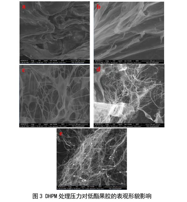 DHPM处理对低酯果胶表观形貌的影响