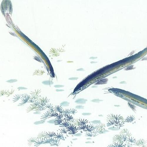 放生泥鳅,弘法阁放生泥鳅,放生野生泥鳅,救助野生泥鳅