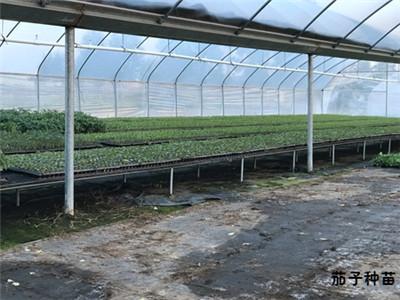 蔬菜种苗育苗床