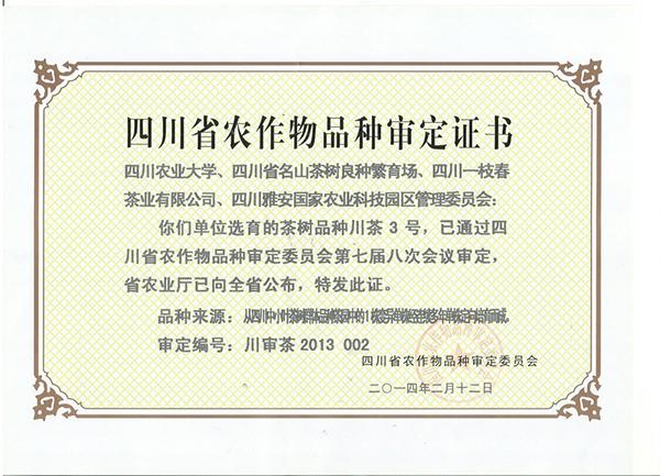 新品种(川茶3号)