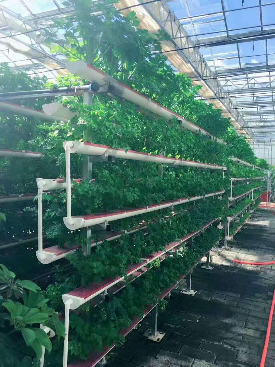 无土栽培设备