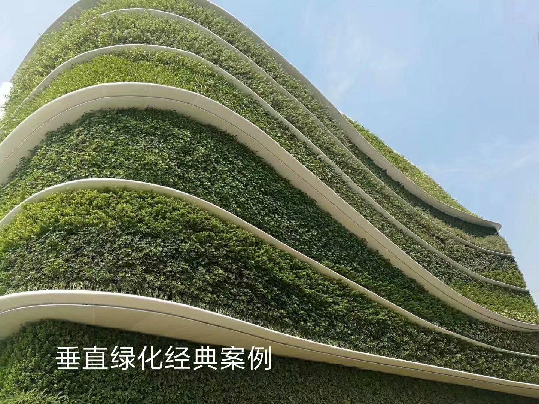 广西百色植物墙,广西百色仿真植物墙
